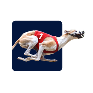 Dog racing games betting odds autohop csgo betting