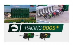 Dogplus News