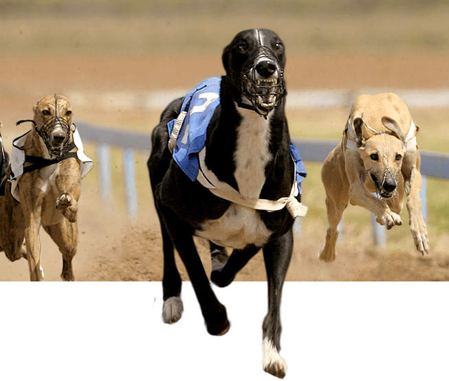 racingdogs_plus_front