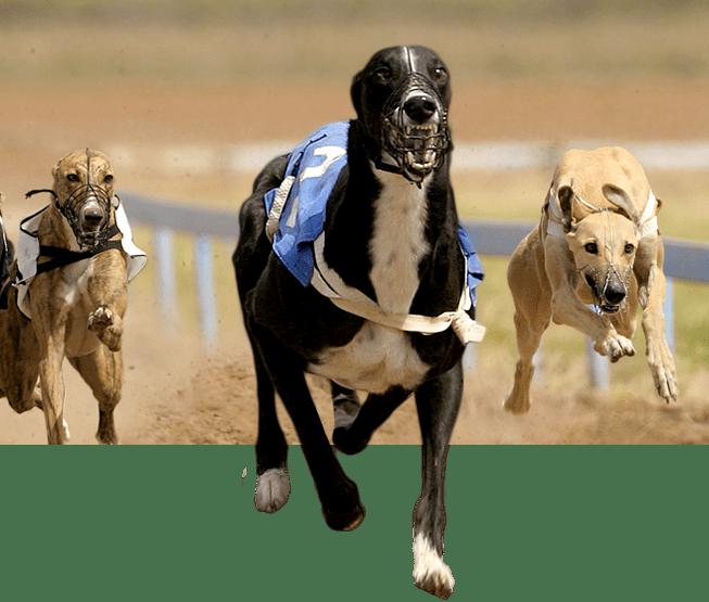racingdogs_plus_front