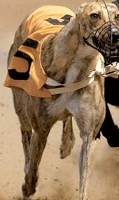racingdogs_plus_light_iphone